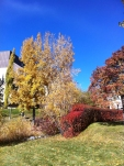 Pretty fall colours in Calgary (October)